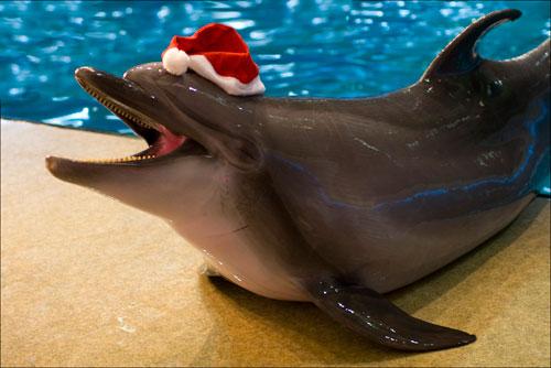 2009-12-25-dolphin-1